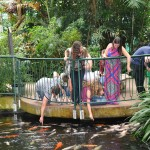 People feeding the Koi Carp fish in Plantasia
